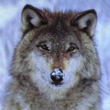 http://www.dereckson.be/avatar/225.jpg